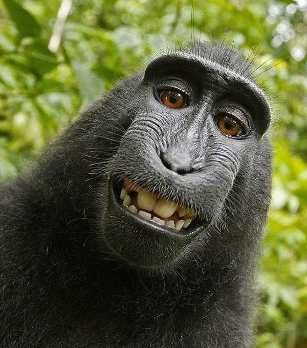 Animal-selfies-10
