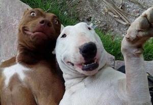 Animal Selfies (29 photos) 11