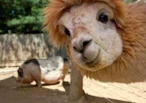 Animal Selfies (29 photos) 13