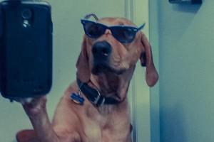 Animal Selfies (29 photos) 14