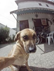 Animal Selfies (29 photos) 16