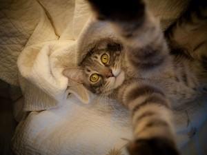 Animal Selfies (29 photos) 17