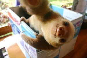 Animal Selfies (29 photos) 19