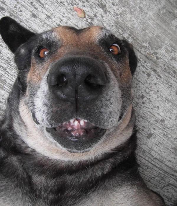 Animal-selfies-23