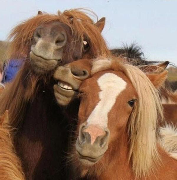 Animal-selfies-27