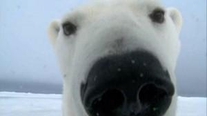 Animal Selfies (29 photos) 28