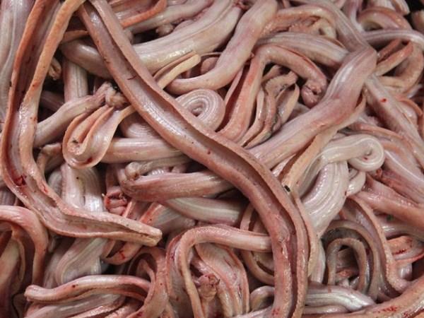 Snakeskin-industry-in-Indonesia (4)