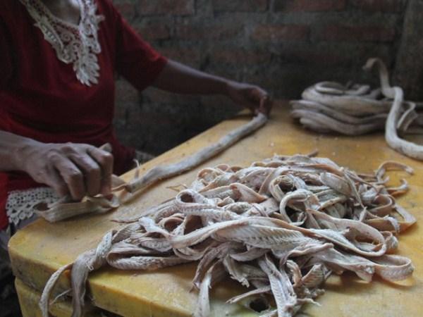 Snakeskin-industry-in-Indonesia (5)
