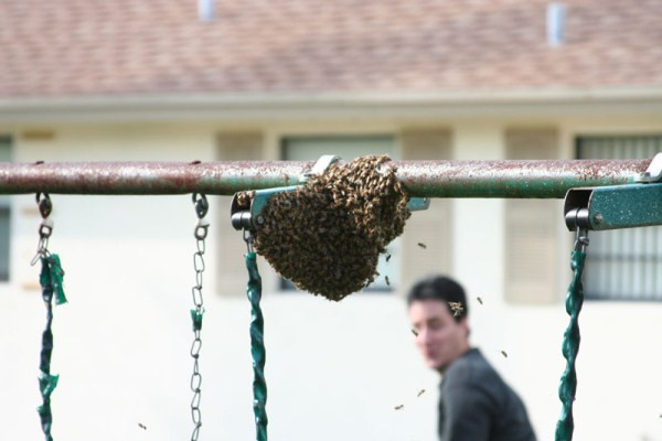 bees-extermination (22)
