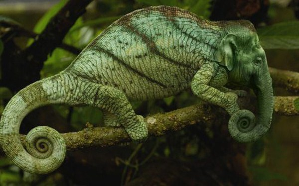 hybrid-animals26