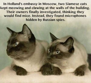 30 Odd and Interesting Facts (30 photos) 20