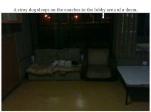 Most Disgusting Student Dormitory in the World (33 photos) 19