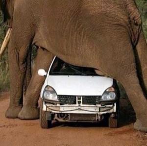 Animals vs Cars (37 photos) 12