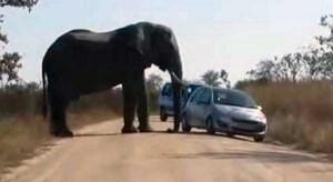 Animals vs Cars (37 photos) 18