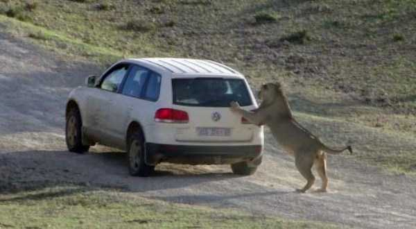 Animals vs Cars (37 photos) 19