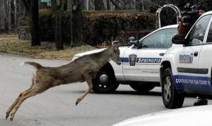 Animals vs Cars (37 photos) 2