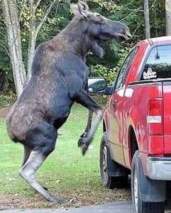 Animals vs Cars (37 photos) 21
