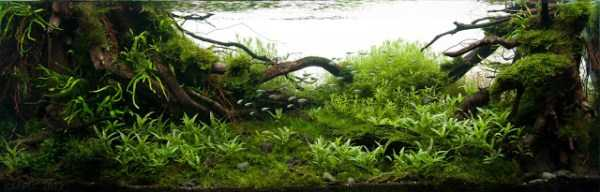 best-aquarium-underwater-decoration-ideas (10)