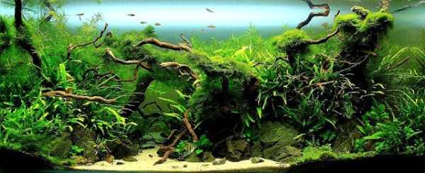 best-aquarium-underwater-decoration-ideas (100)