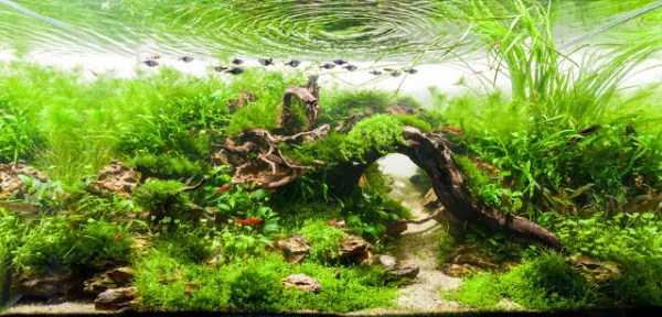 best-aquarium-underwater-decoration-ideas (102)
