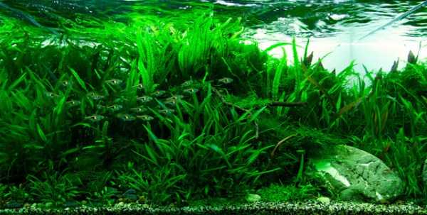 best-aquarium-underwater-decoration-ideas (104)