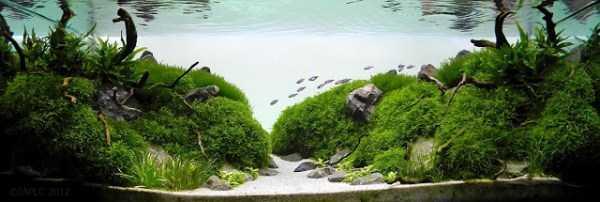 best-aquarium-underwater-decoration-ideas (105)