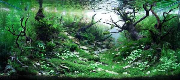 best-aquarium-underwater-decoration-ideas (106)