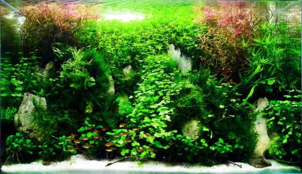 best-aquarium-underwater-decoration-ideas (107)