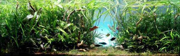 best-aquarium-underwater-decoration-ideas (11)