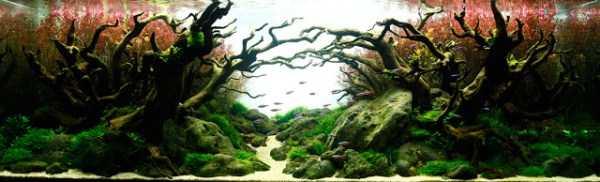 best-aquarium-underwater-decoration-ideas (12)