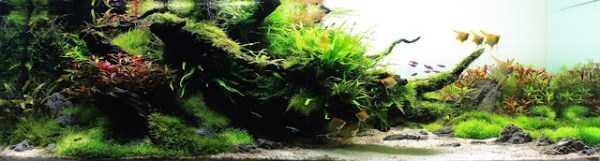 best-aquarium-underwater-decoration-ideas (13)