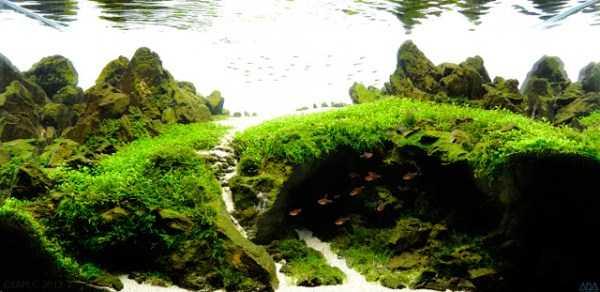 best-aquarium-underwater-decoration-ideas (14)