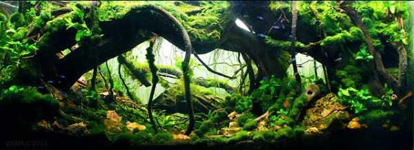 best-aquarium-underwater-decoration-ideas (15)