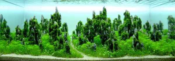 best-aquarium-underwater-decoration-ideas (16)