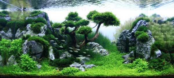 best-aquarium-underwater-decoration-ideas (17)