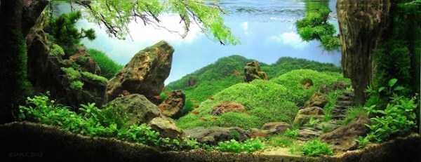 best-aquarium-underwater-decoration-ideas (18)