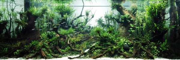 best-aquarium-underwater-decoration-ideas (19)
