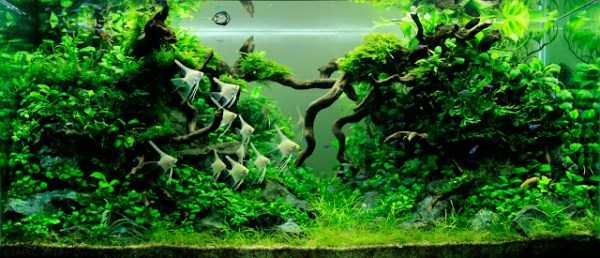 best-aquarium-underwater-decoration-ideas (2)