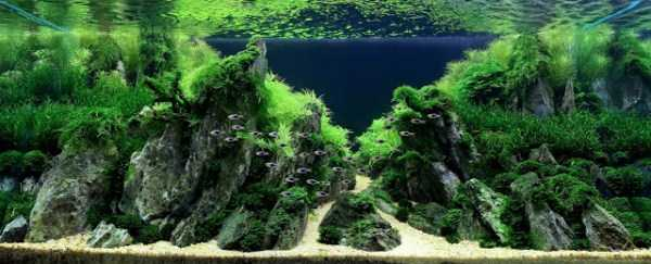 best-aquarium-underwater-decoration-ideas (20)