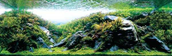 best-aquarium-underwater-decoration-ideas (21)