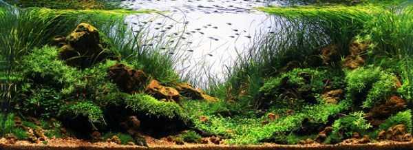 best-aquarium-underwater-decoration-ideas (22)