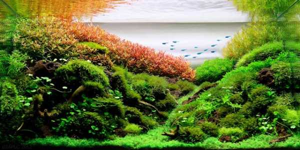 best-aquarium-underwater-decoration-ideas (23)