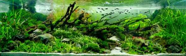 best-aquarium-underwater-decoration-ideas (24)