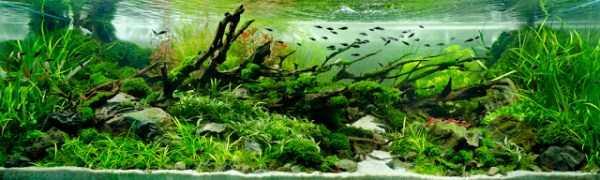 best-aquarium-underwater-decoration-ideas (24)