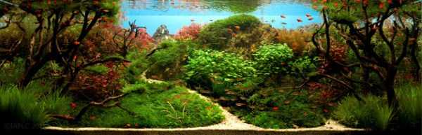 best-aquarium-underwater-decoration-ideas (25)