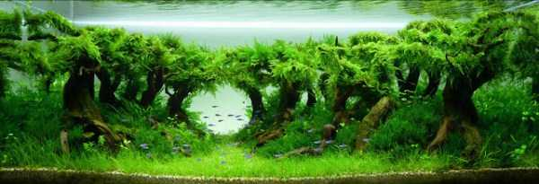 best-aquarium-underwater-decoration-ideas (26)