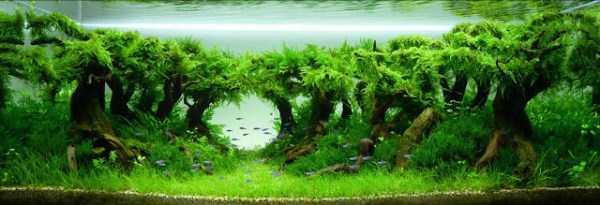 best-aquarium-underwater-decoration-ideas (26)