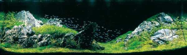 best-aquarium-underwater-decoration-ideas (27)