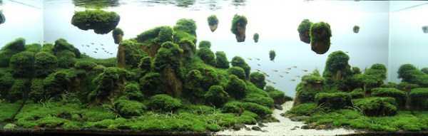 best-aquarium-underwater-decoration-ideas (28)