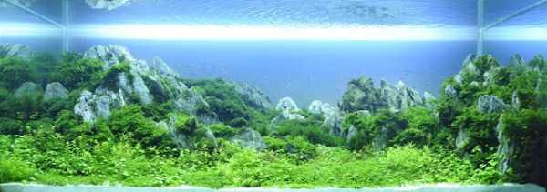 best-aquarium-underwater-decoration-ideas (30)